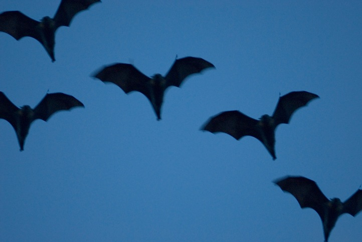 austinfc bats congress-bridge